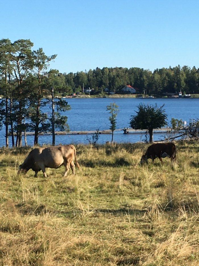 Kor och sjö
